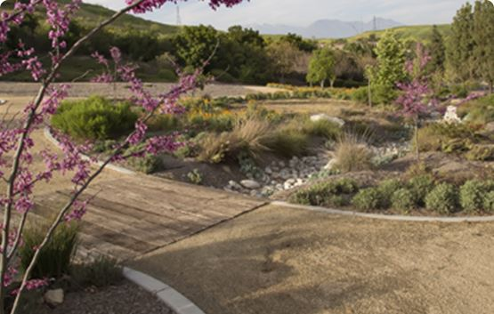 Landscaped area with trees with purple blooms
