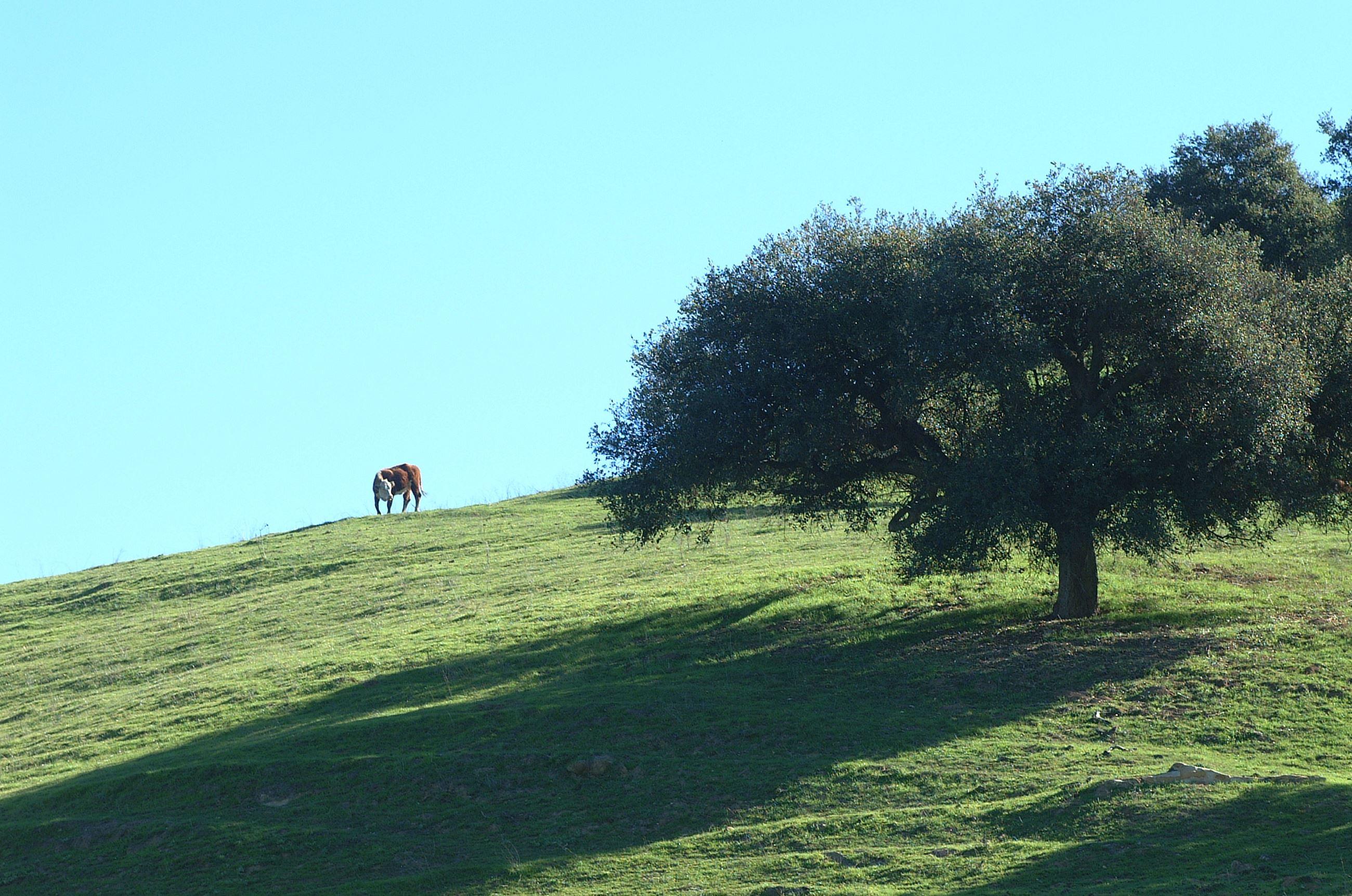 Tree Maintenance & Preservation | Chino Hills, CA ...