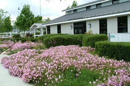 Photo of the floral beauty of the McCoy Equestrian Center