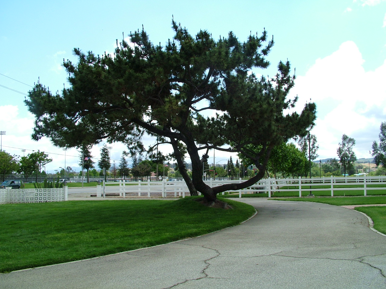 Photo of a charming tree in front of the McCoy residence
